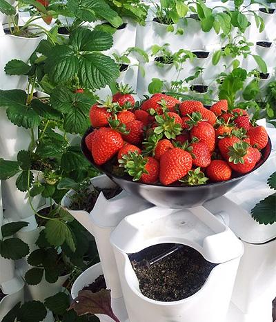 minigarden-strawberries